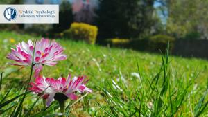 Tło do Zooma - kwiaty w ogrodzie Wydziału